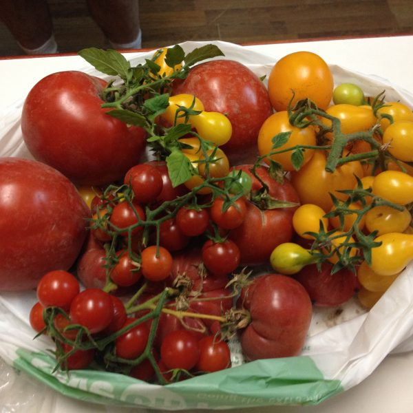 Tom's garden tomatoes